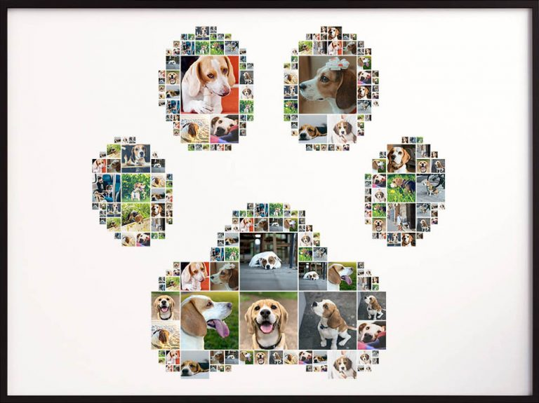 Dog collage in the shape of a paw